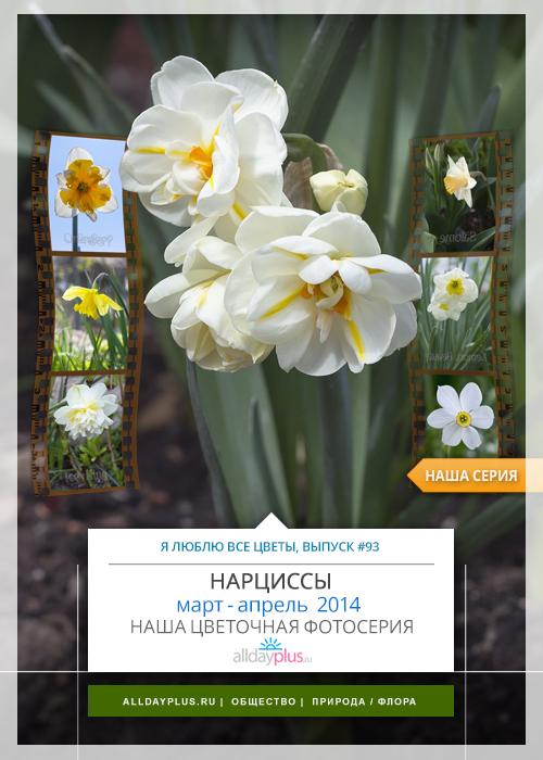 Я люблю все цветы, выпуск #95 | «Нарцисс - талисман любви и символ страсти».