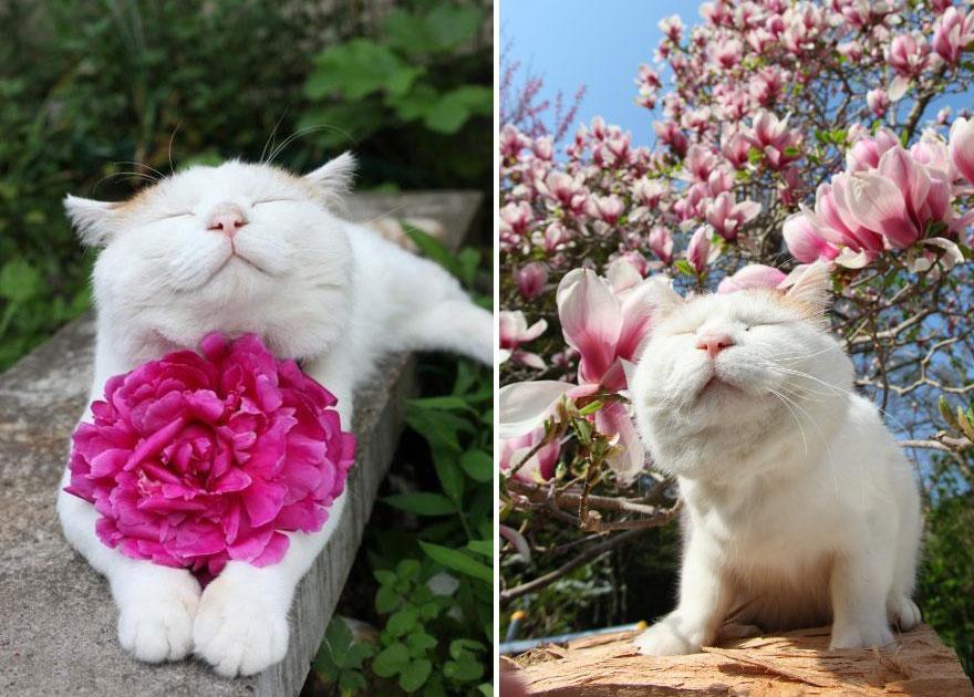 Цветы звери