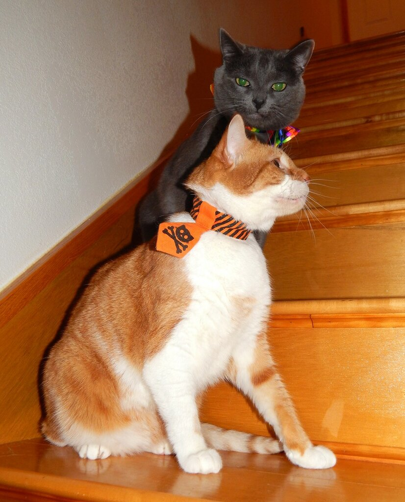 Титан и Элвис отмечают Хэллоуин.