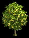 грушевое дерево aromacharm