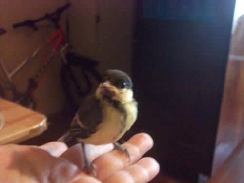 клуб людей и птиц форумы Ptic Ru три синички