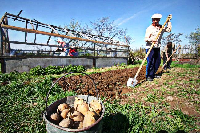 Члены садоводческих товариществ в Беларуси будут делать равные взносы независимо от размера участка