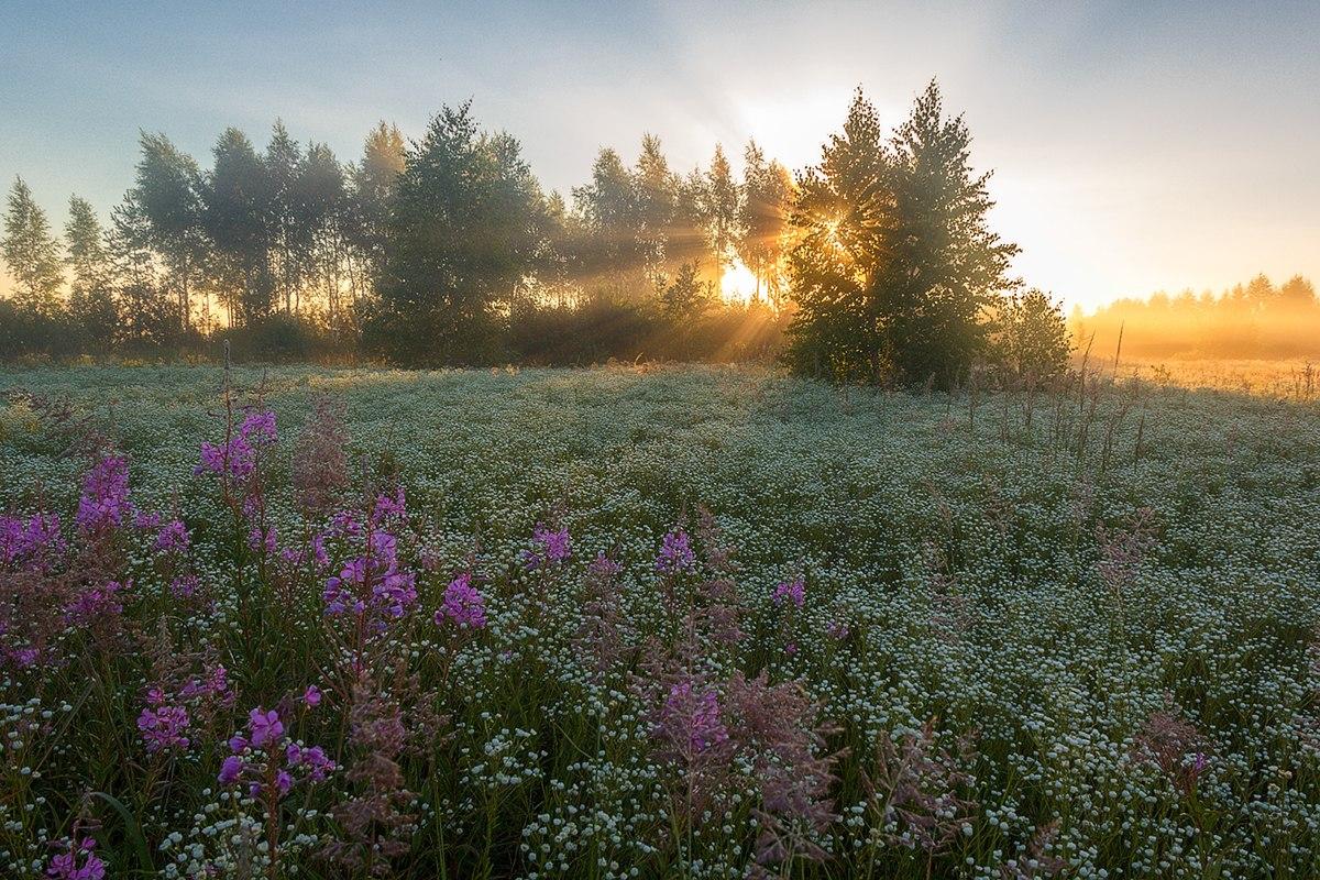 солнце над полевыми цветами