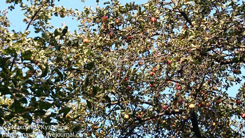 Коломенские яблочки