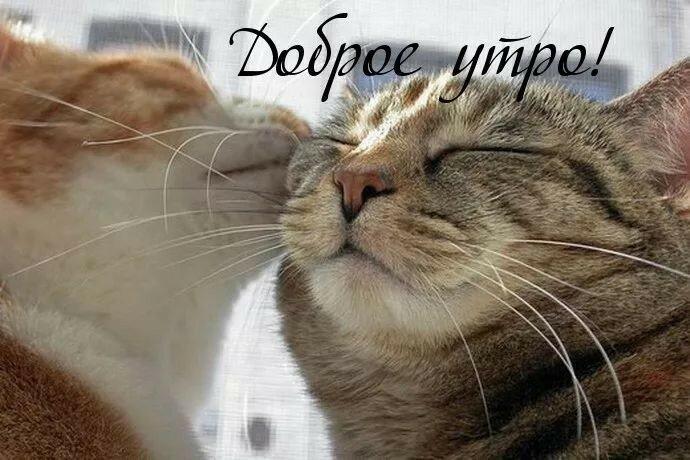 коты доброе утро картинки