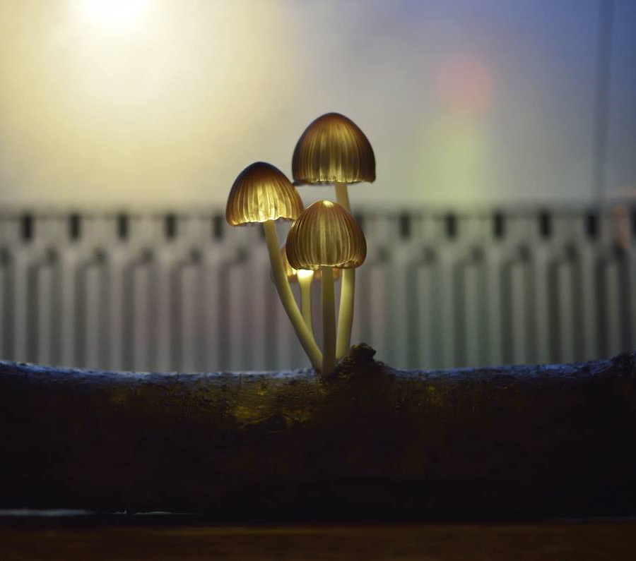 Светящиеся грибы от Yukio Takano