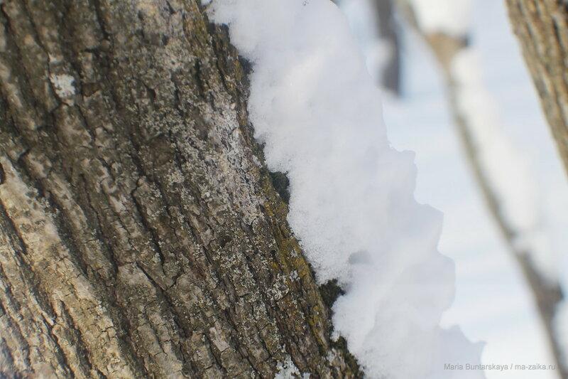 Снежная радость, Саратов, Кумысная поляна, 17 февраля 2017 года