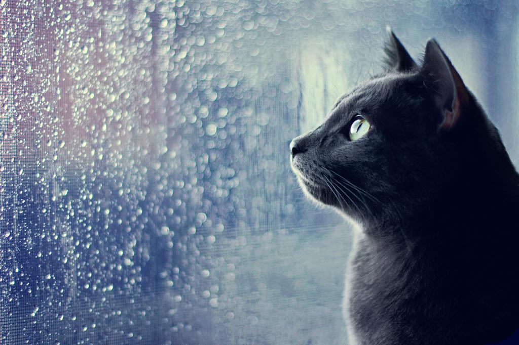 Мой заботливый, ласковый кот.jpg