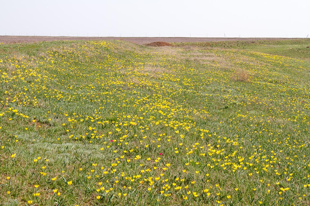 весна цветы фото 5