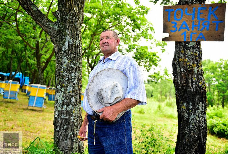 Гектар пчел: как жители Приморья осваивают бесплатную землю