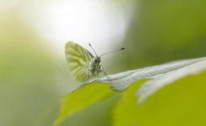 в зеленом мире