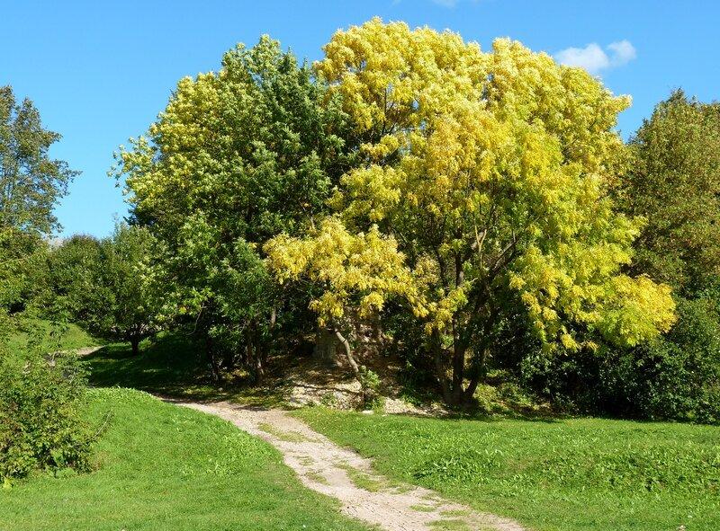 Осенние деревья