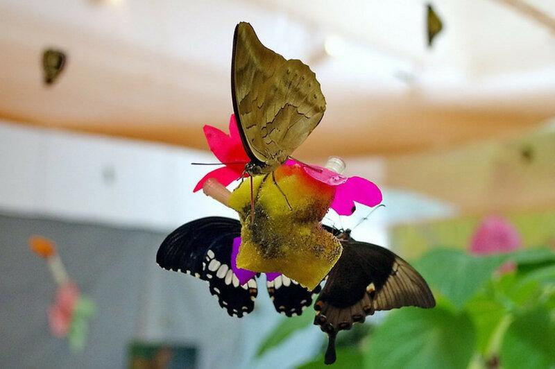 Выставка бабочек в Гомеле 2013