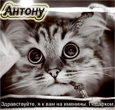 Антону. Здравствуйте, я к вам на именины открытка поздравление картинка
