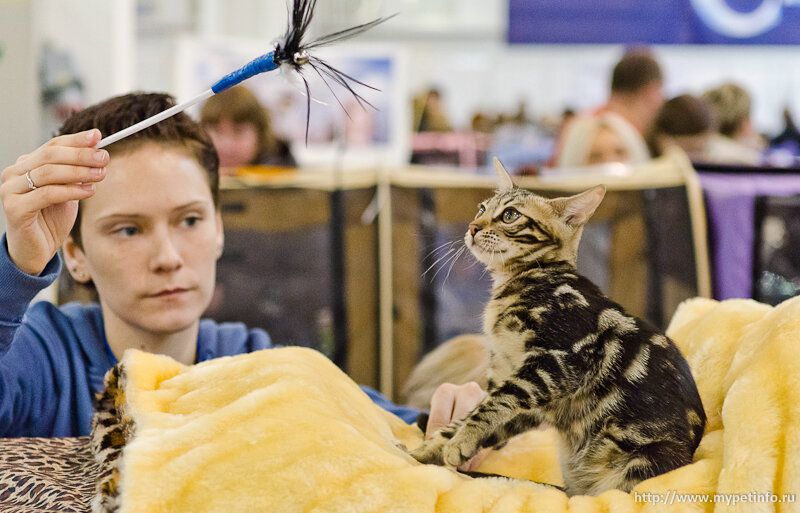 Выставка кошек Кэтсбург-2014