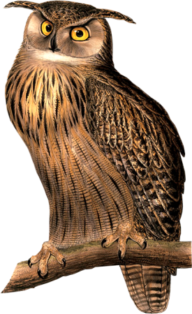 Bird33(owl)_dhedey.png