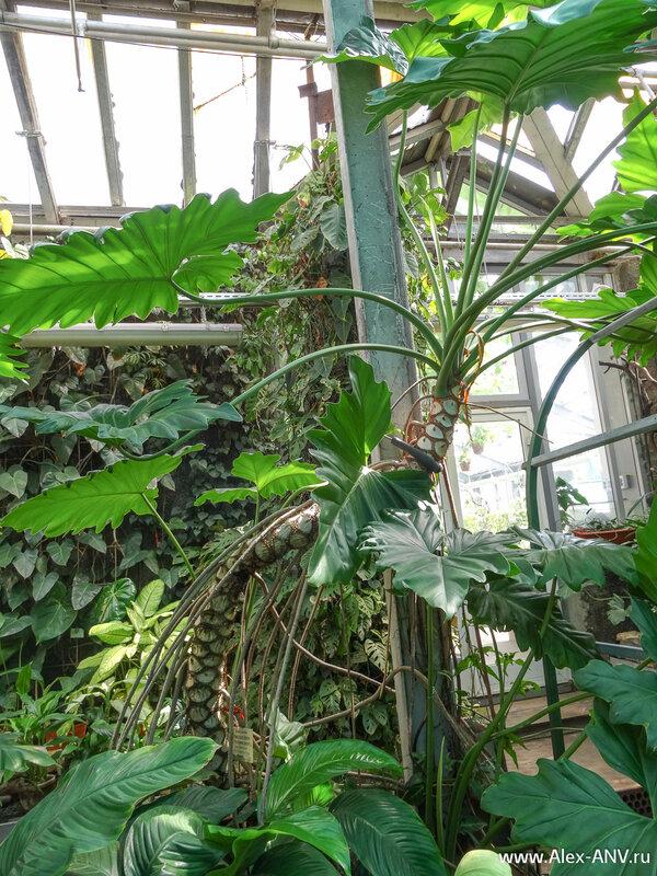 На этом экскурсия по оранжереям Тропического маршрута  подошла к концу. Я показал лишь малую часть коллекции. Остальное вы можете увидеть сами, когда приедете в Ботанический сад Санкт-Петербурга.