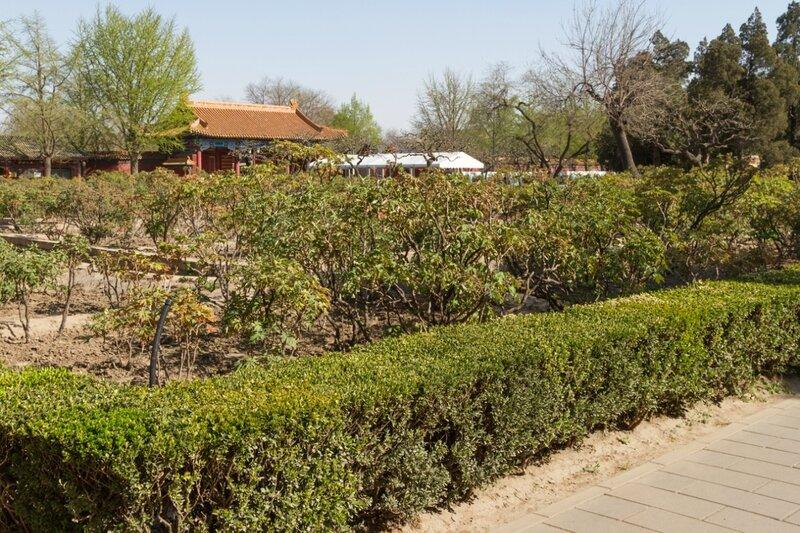 Сад пионов, Парк Цзиншань, Пекин