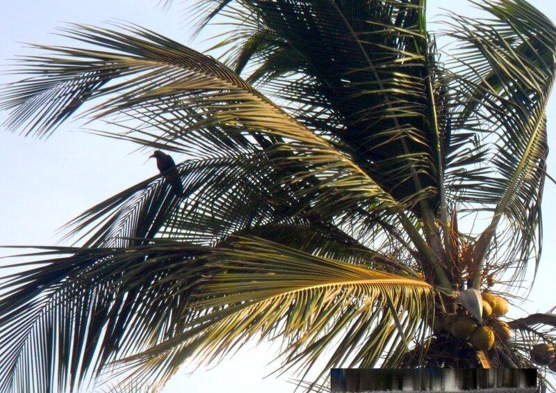 Индия, фотоальбом, фотограф Валентина Лана