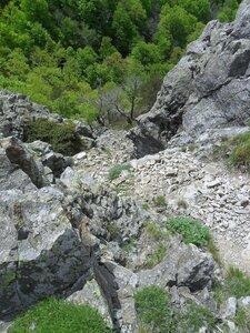 Лес, внизу, под скалами ... SAM_6780.JPG
