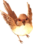 Bird03_dhedey.png