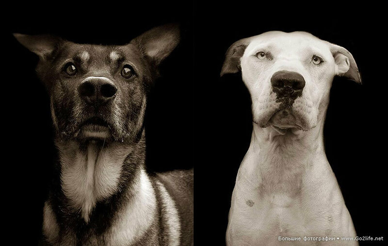 знакомства для собак хабаровск
