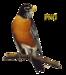 Bird Graphics.png