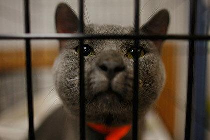 Британскому парламенту приемный кот оказался в тягость из-за того, что есть страх перекормить его