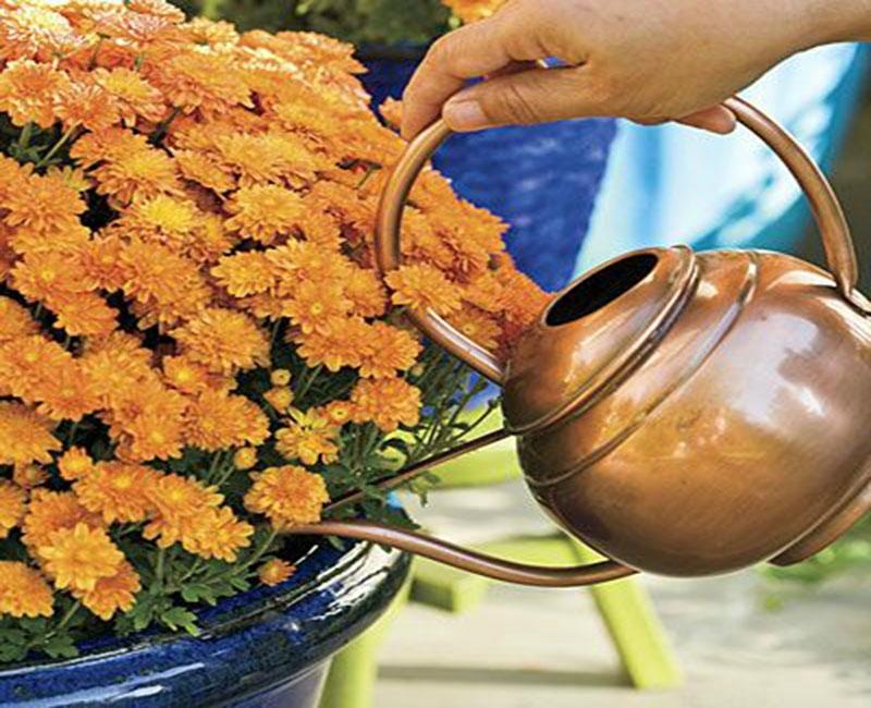Дрожжи — подкормка и стимулятор роста растений