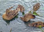 Птицы в Солнцево