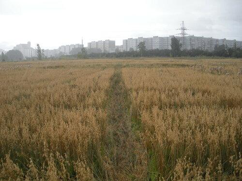 Круги на полях 2015 21 июля Тольятти Россия Автор aото Паша Радѣ