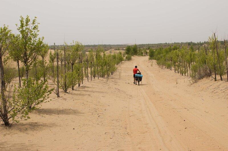 дорога через лесопосадки в пустыне Кубучи (пески Кузупчи, Kubuqi desert)