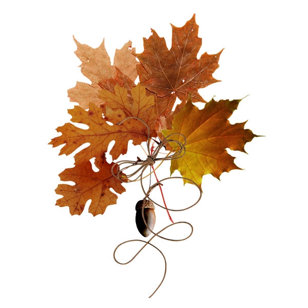 Autumn Owls Elements (33).png