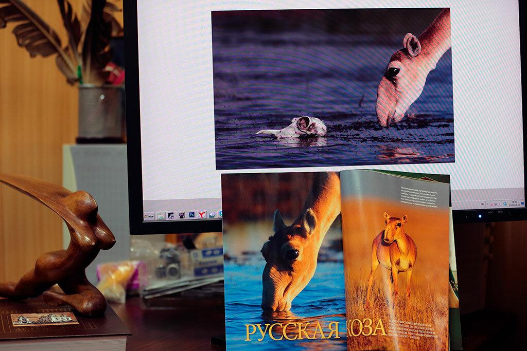 РУССКАЯ КОЗА - Ваш любимый фотограф