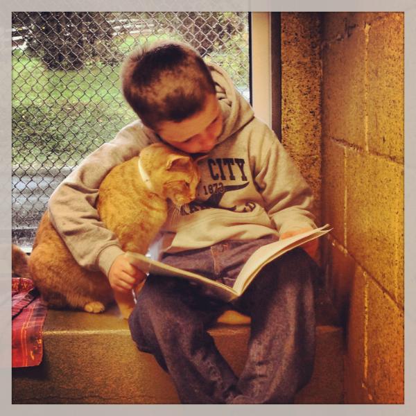 Дети читают книги кошкам
