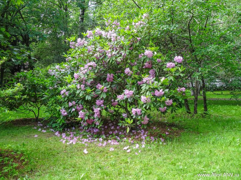 Многие растения уже отцвели и опавшие лепестки превратились в красочный ковёр.