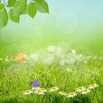 Spring (1).jpg