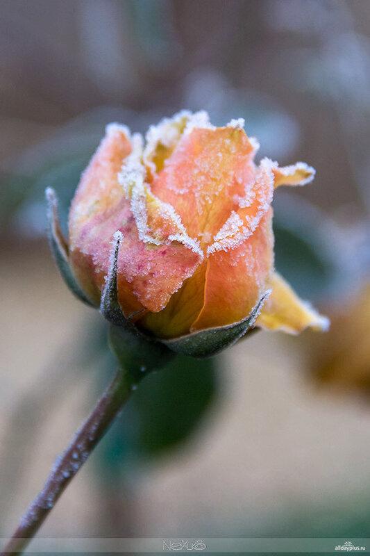У природы нет плохой погоды, выпуск 04 | Когда на улице минус.