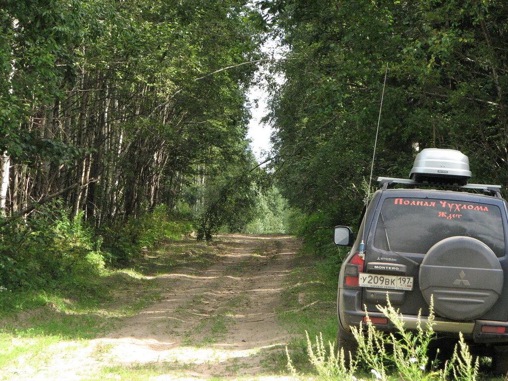 Паджеро спрятан в лесу