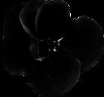 Desclics_Lollipops_EL038.png