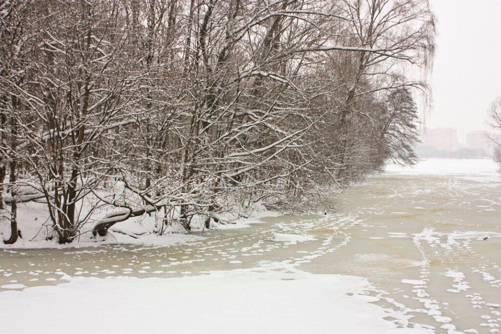 Тимирязевский лес декабрьский