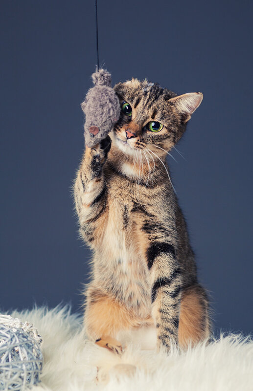 фотографировала кошку для пристроя )