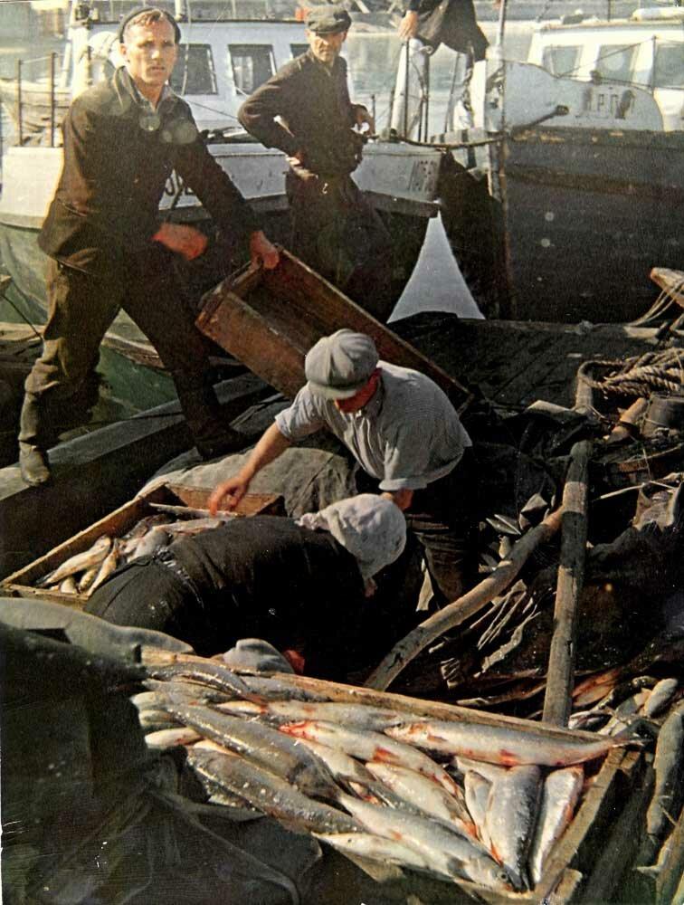Прием улова у рыбаков