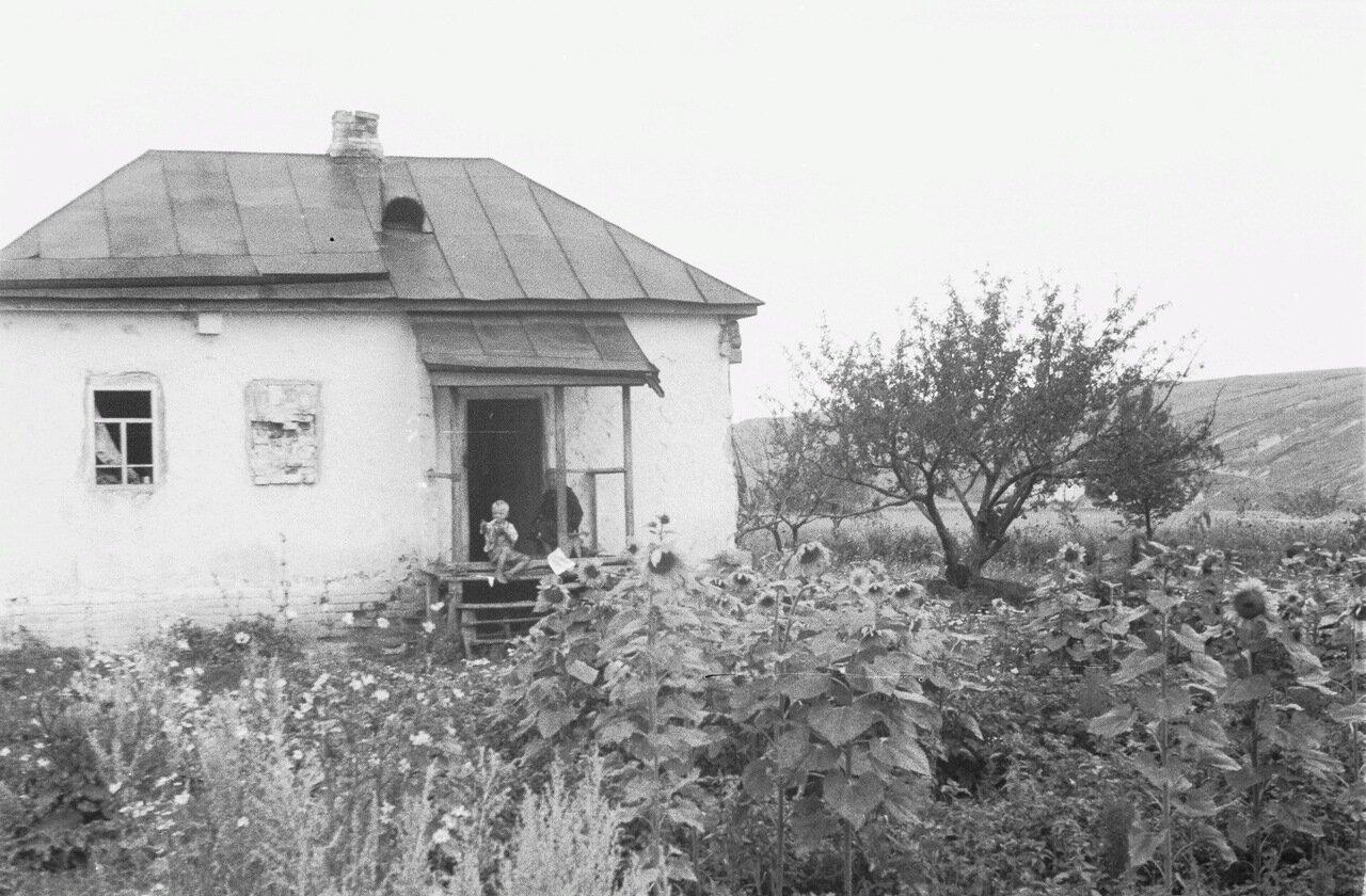 Белгородская область. Вид на дом (возможно, в Лучках) с поля подсолнечника.