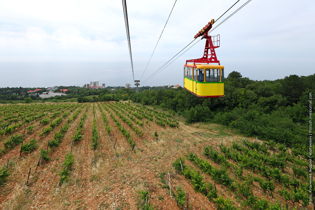 вид на Черное море и виноградник из вагончика канатной дороги на Ай-Петри