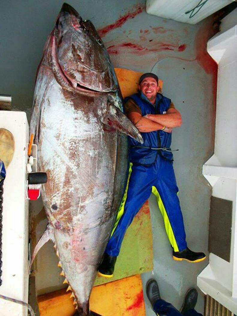 блесна на акулу и тунца