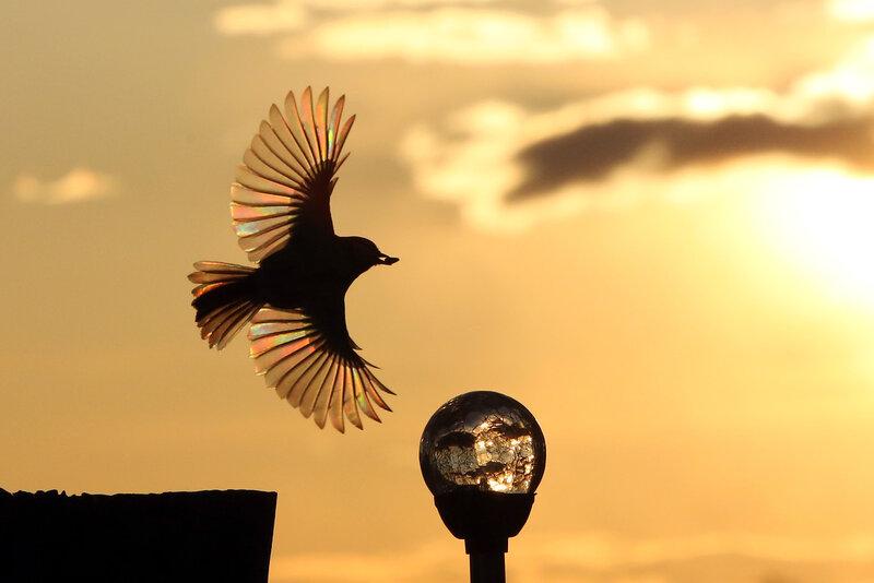 Разукрасило солнце перо акварелью