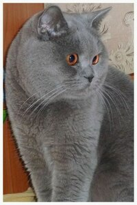 Каталог вяжущих котов 0_e86d3_f0940687_M