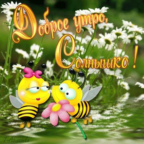Доброе утро, солнышко! Пчелки