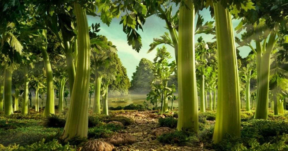 15. Лес из сельдерея